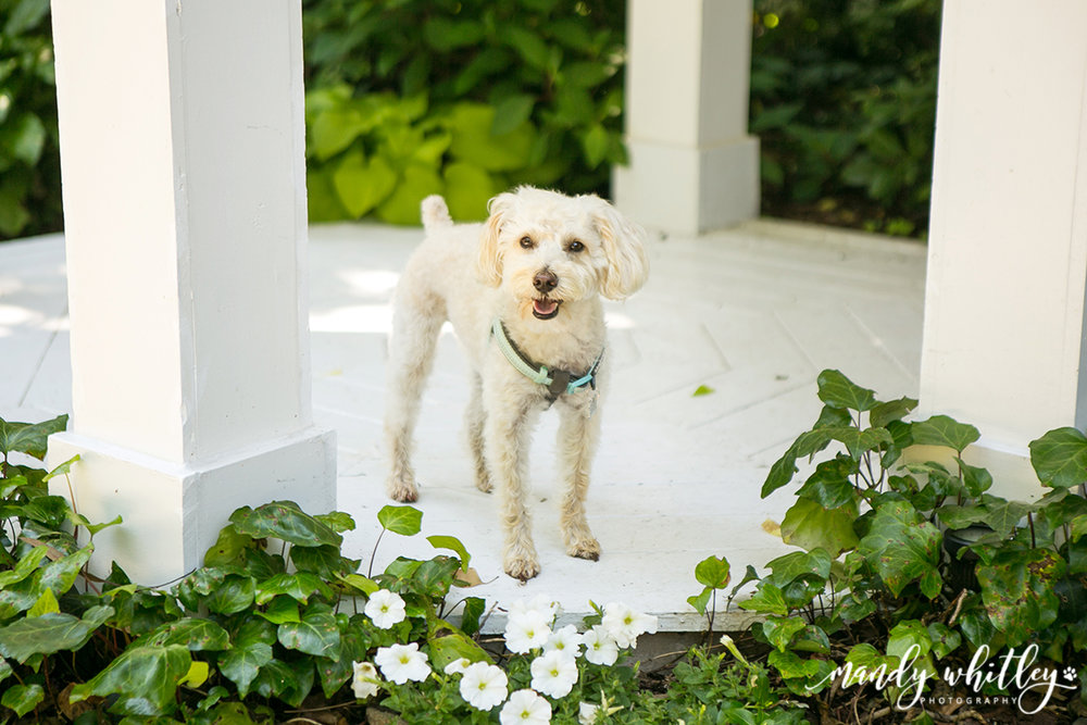 Nashville Pet Friendly Wedding Venue
