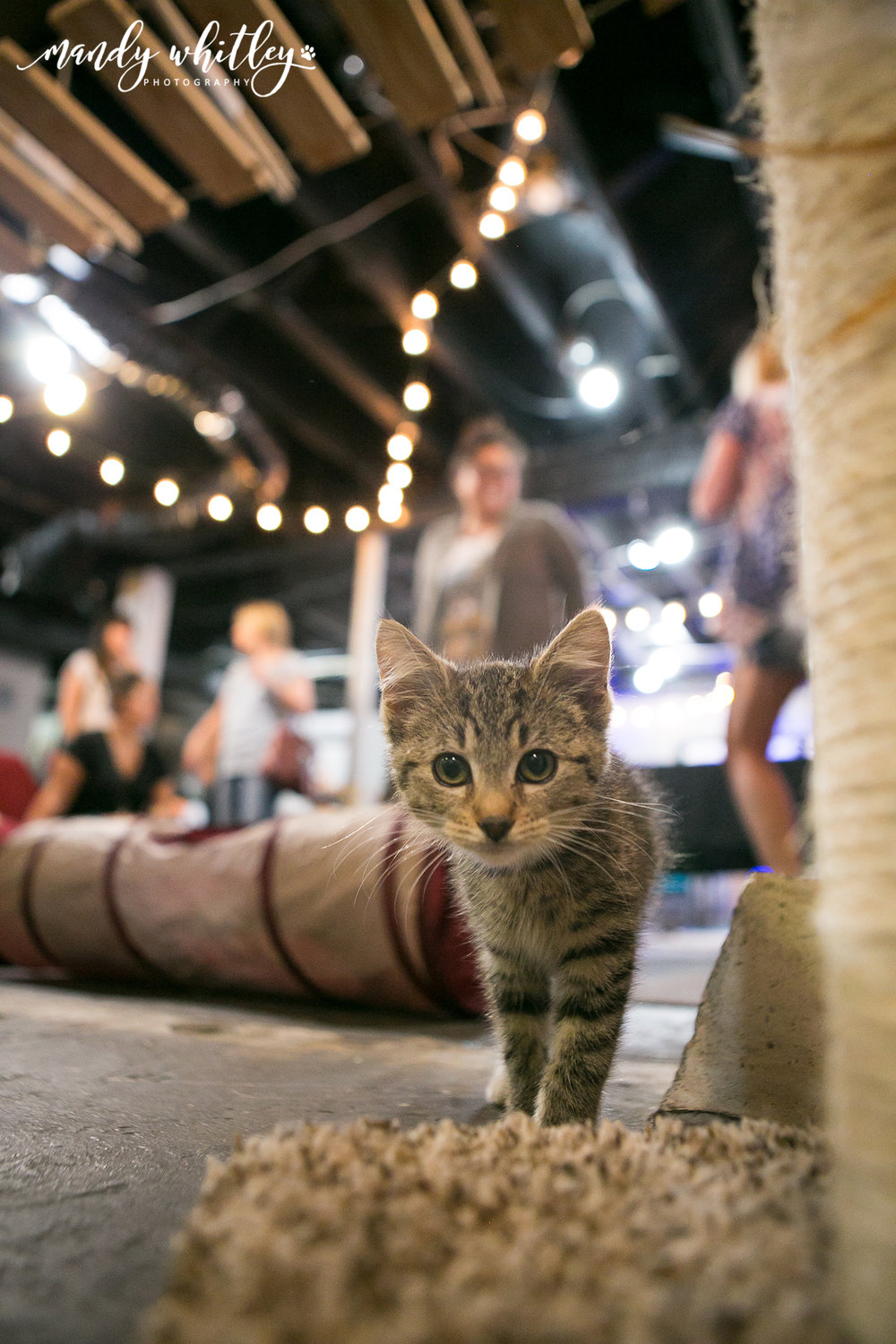 Cat Cafe Nashville