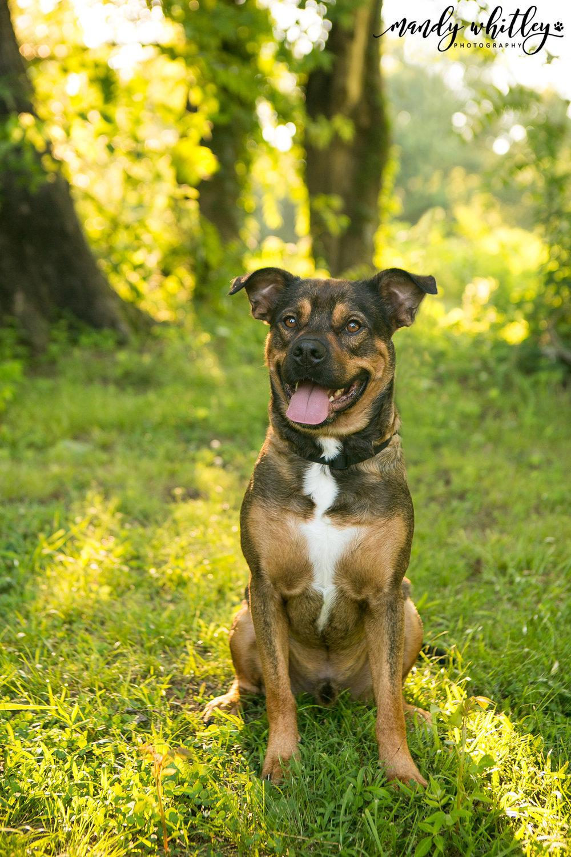 Nashville Pet and Portrait Photographer