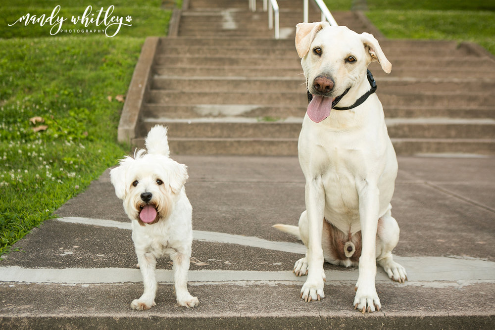Missouri Dog Photographer