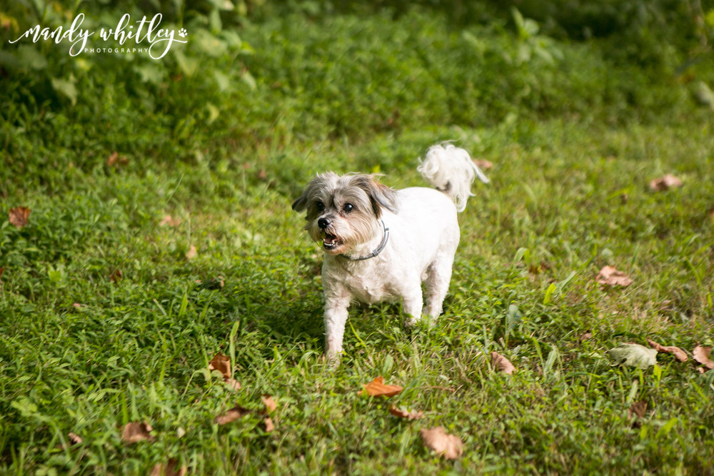 Westmoreland Dog Photographer
