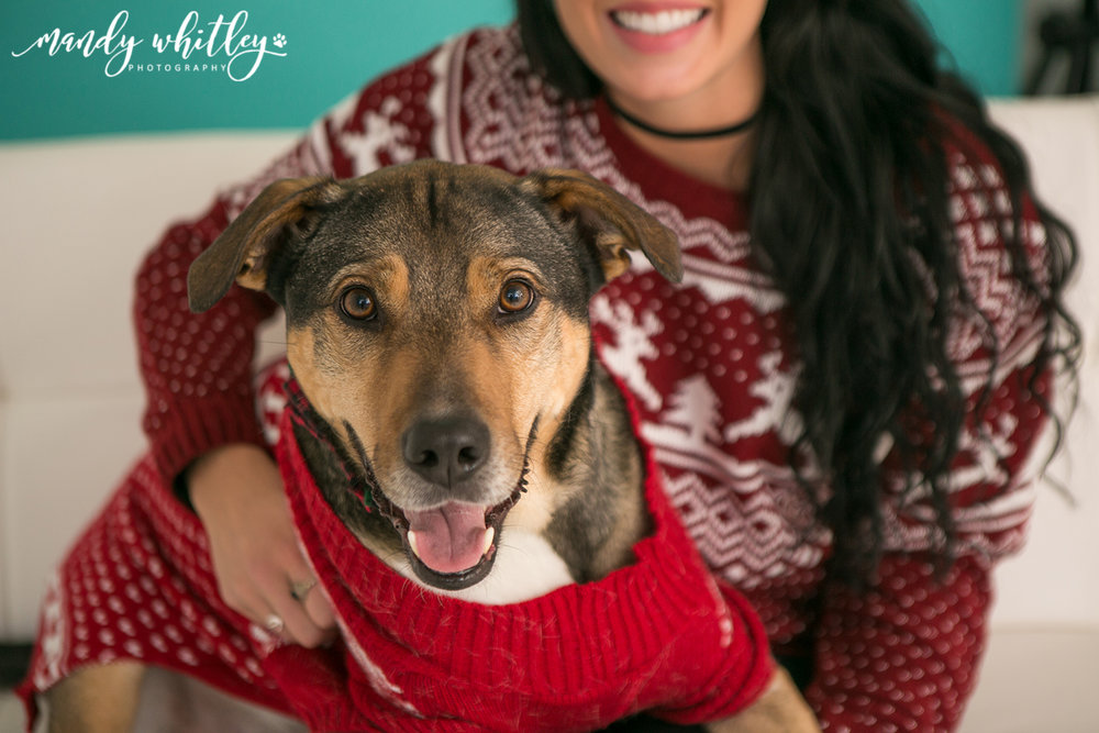 Pet Holiday Portraits Nashville Tennessee