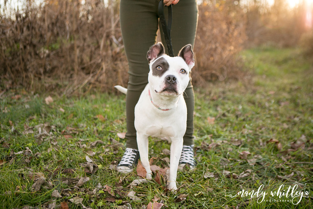 Nashville Pittie Rescue Dogs
