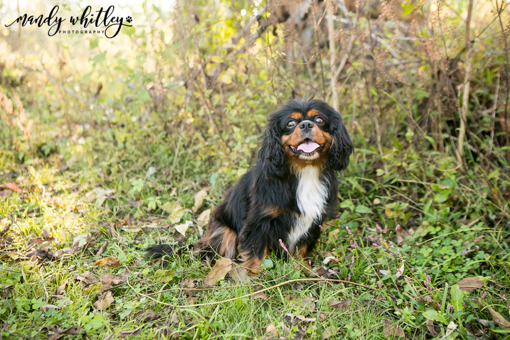 Dog Photographer in Nashville