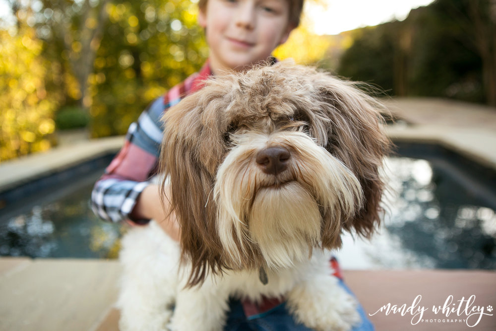 Dog Photographer in Nashville TN Mandy Whitley