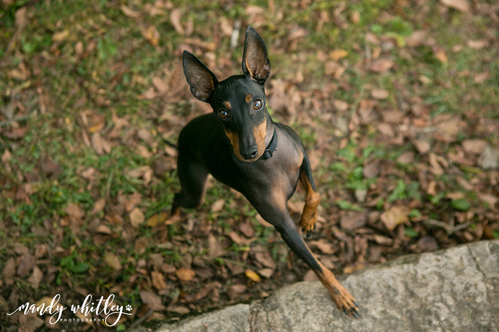 Pet and Animal Photographer in Tennessee