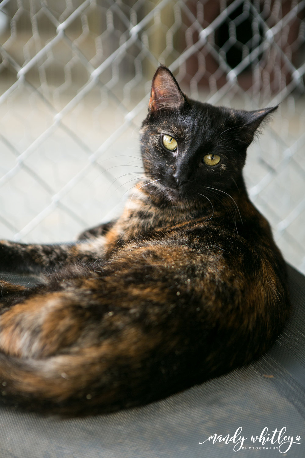 RARE Middle Tennessee cat for adoption