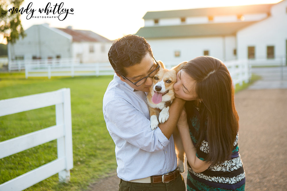 Portraits with pets dog photographer