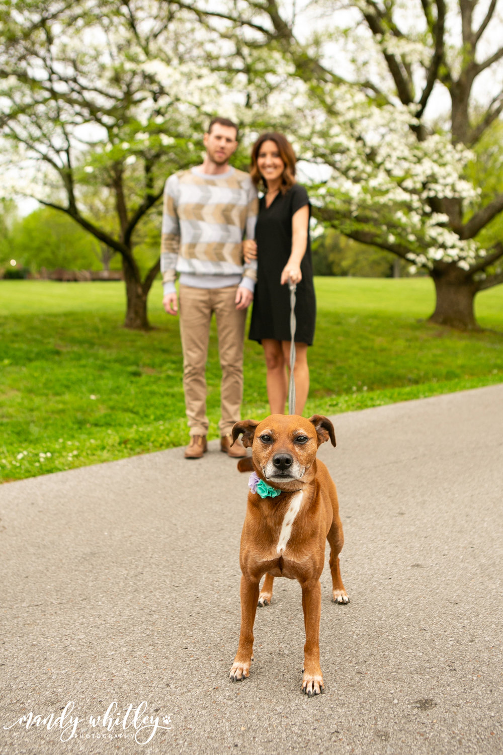 Best Dog Photographer in Tennessee