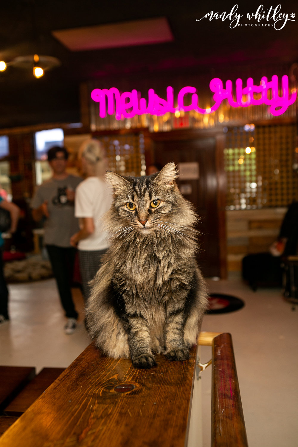 Mewsic Kitty Cafe Nashville Tennessee