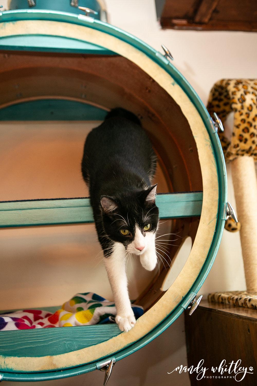 Nashville Cat Photographer Mandy Whitley