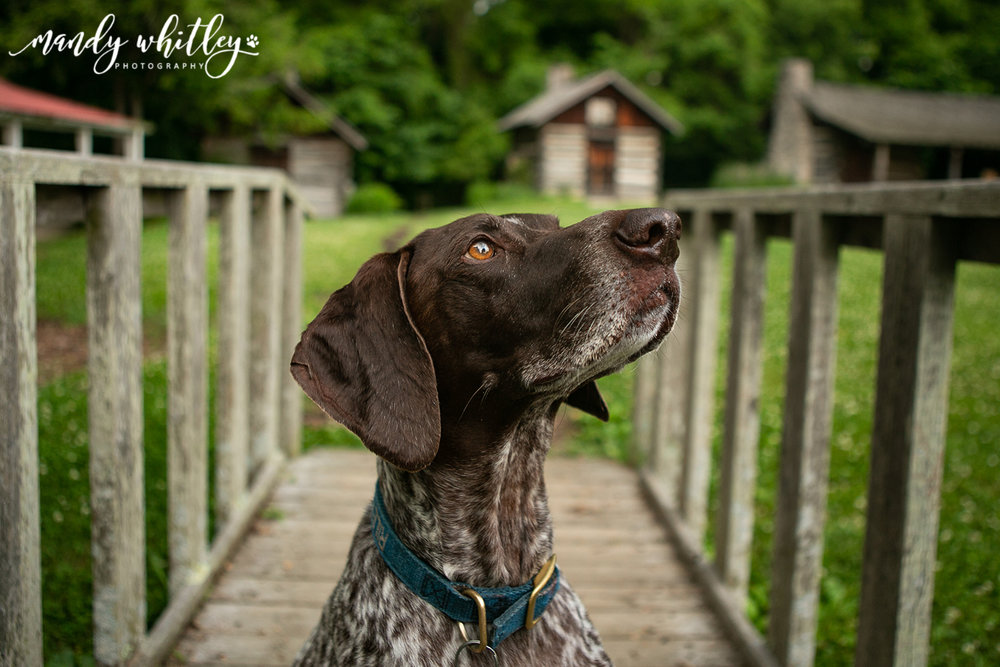 Top Dog Photographers in Tennessee