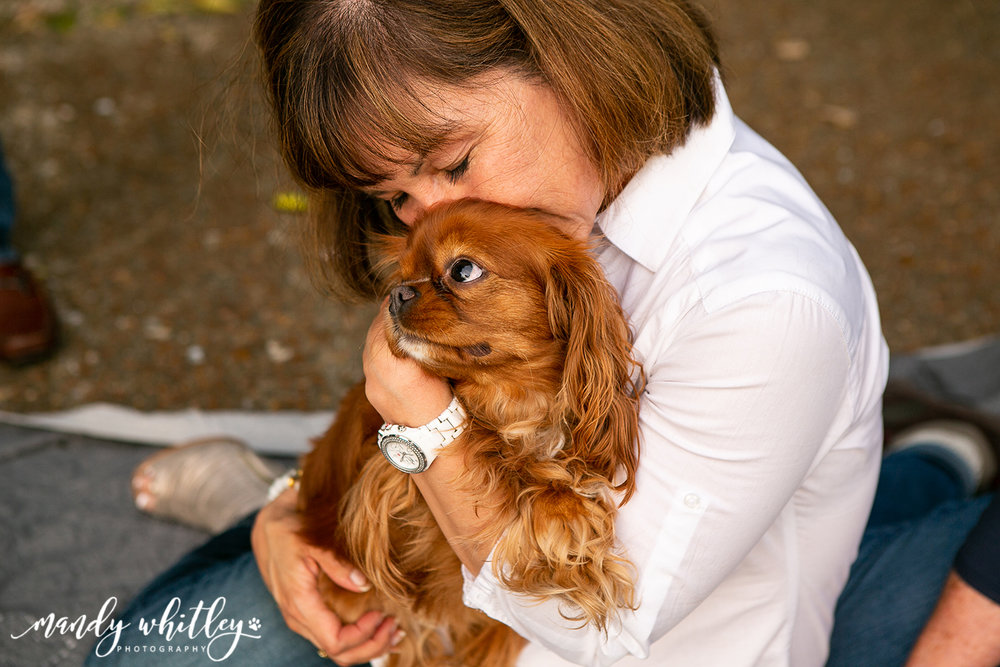 best dog photographer in nashville mandy whitley