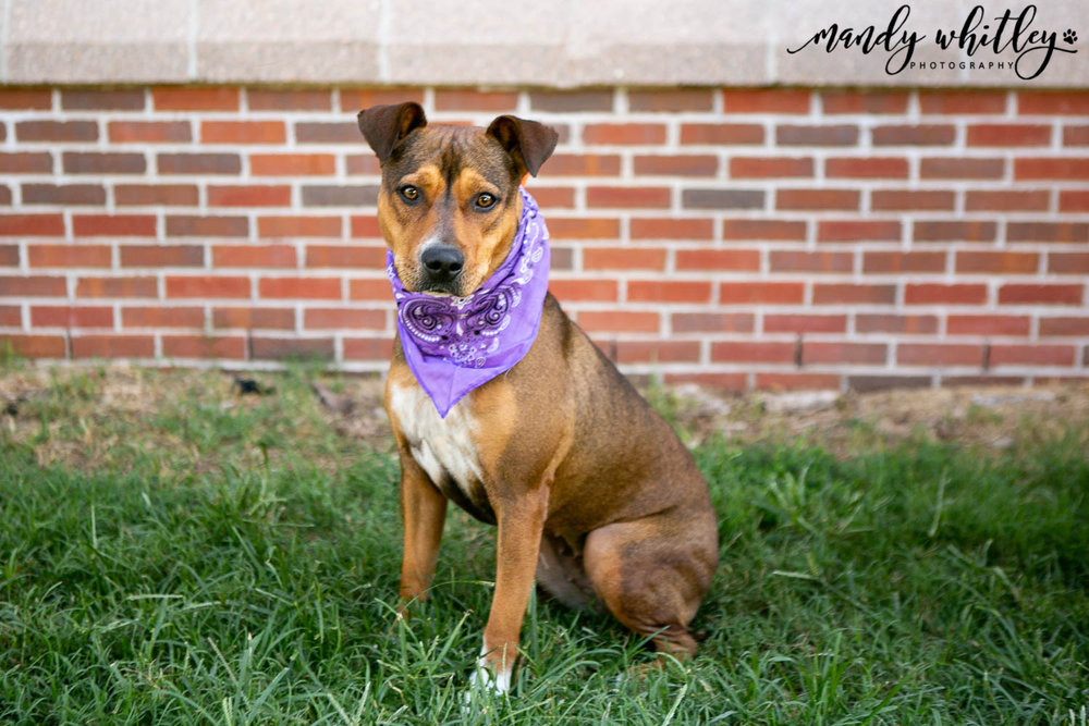 dogs for adoption in nashville rutherford county