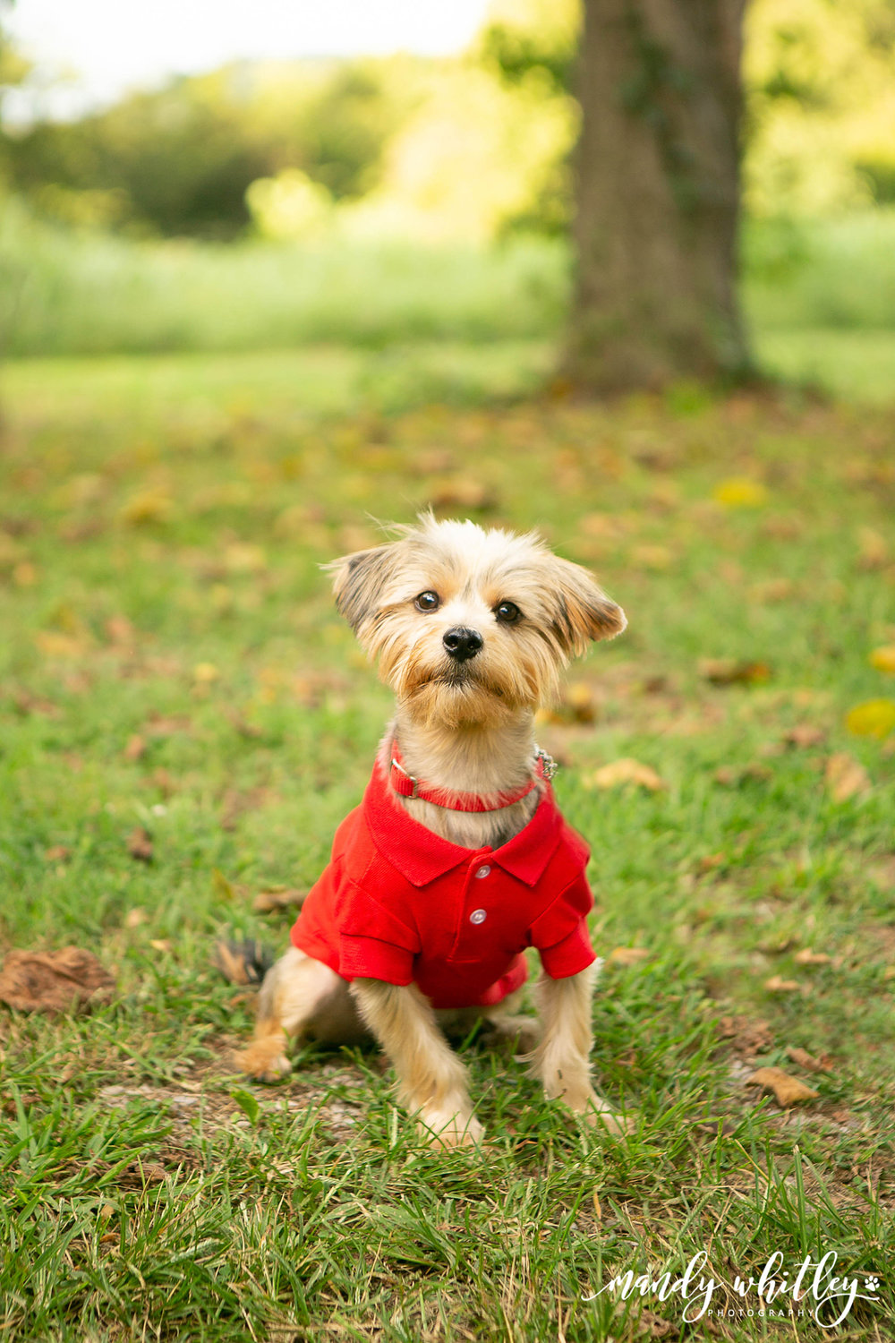 dog photographers in tennessee