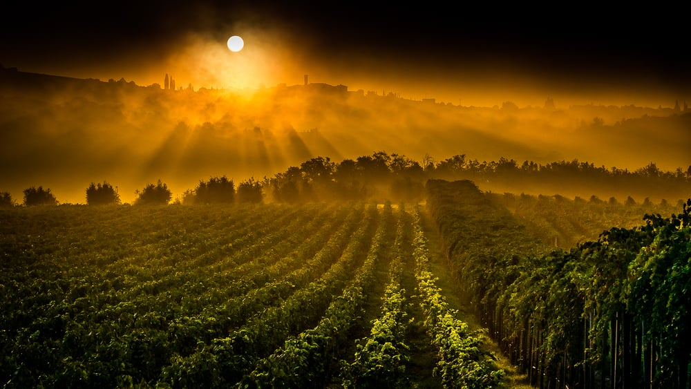 Here is the San Felice Sunrise taken within the vineyards
