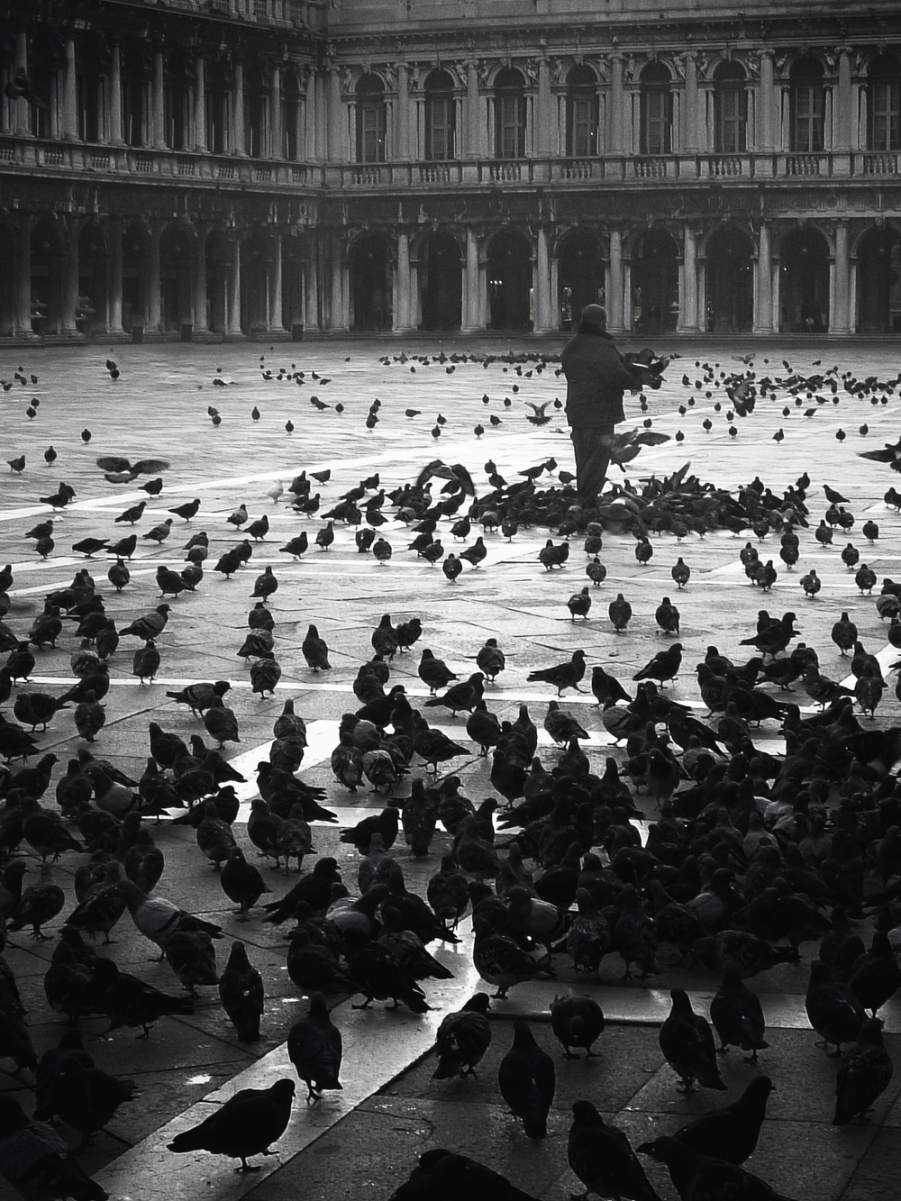 A few of the pigeons of the Piazza
