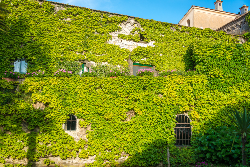 The vine-covered Villa Cimbrone
