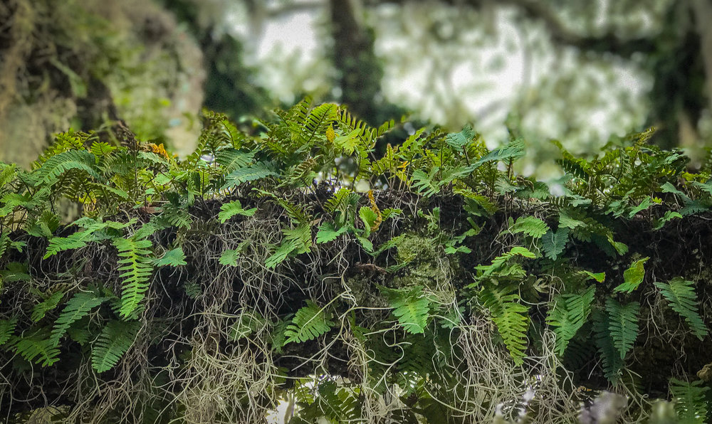 Spanish Moss & Fern