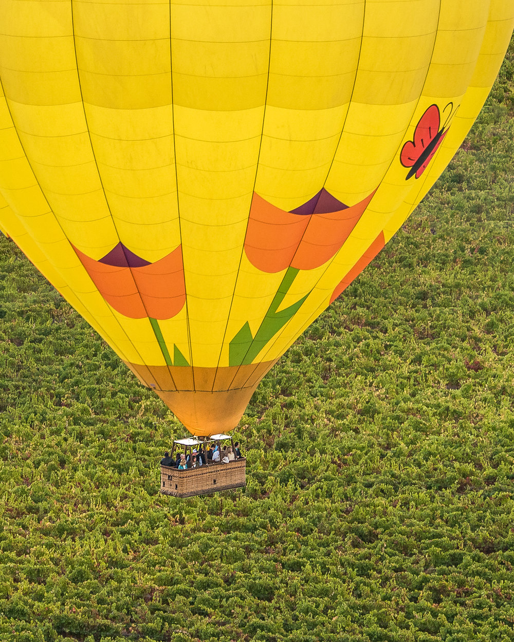 NAPA-Baloon-19.jpg