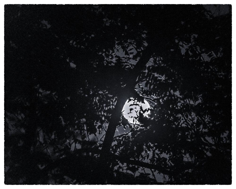 NAPA-Yosemite-11.jpg