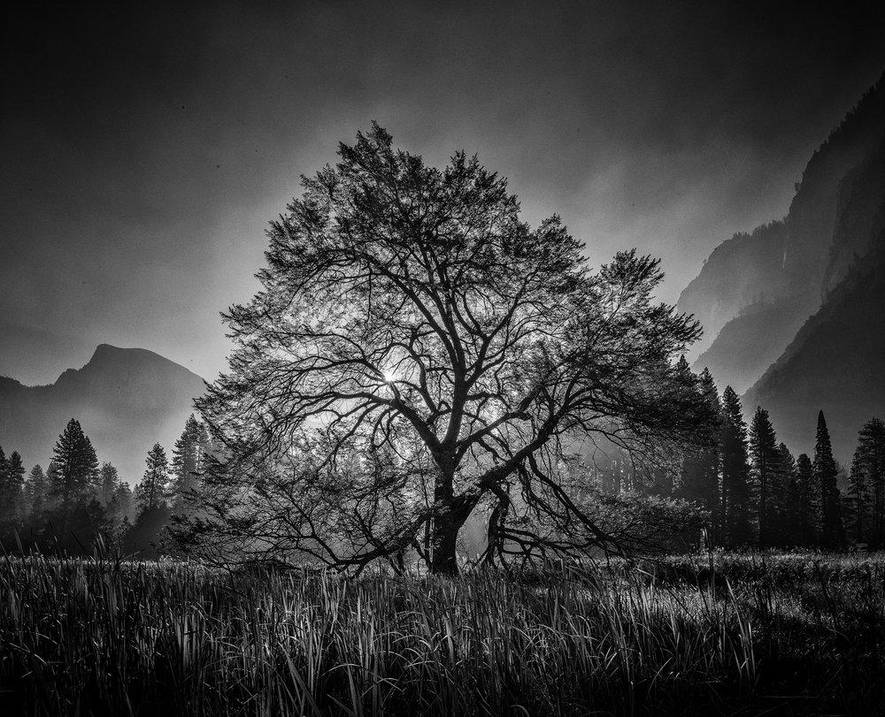 NAPA-Yosemite-40.jpg