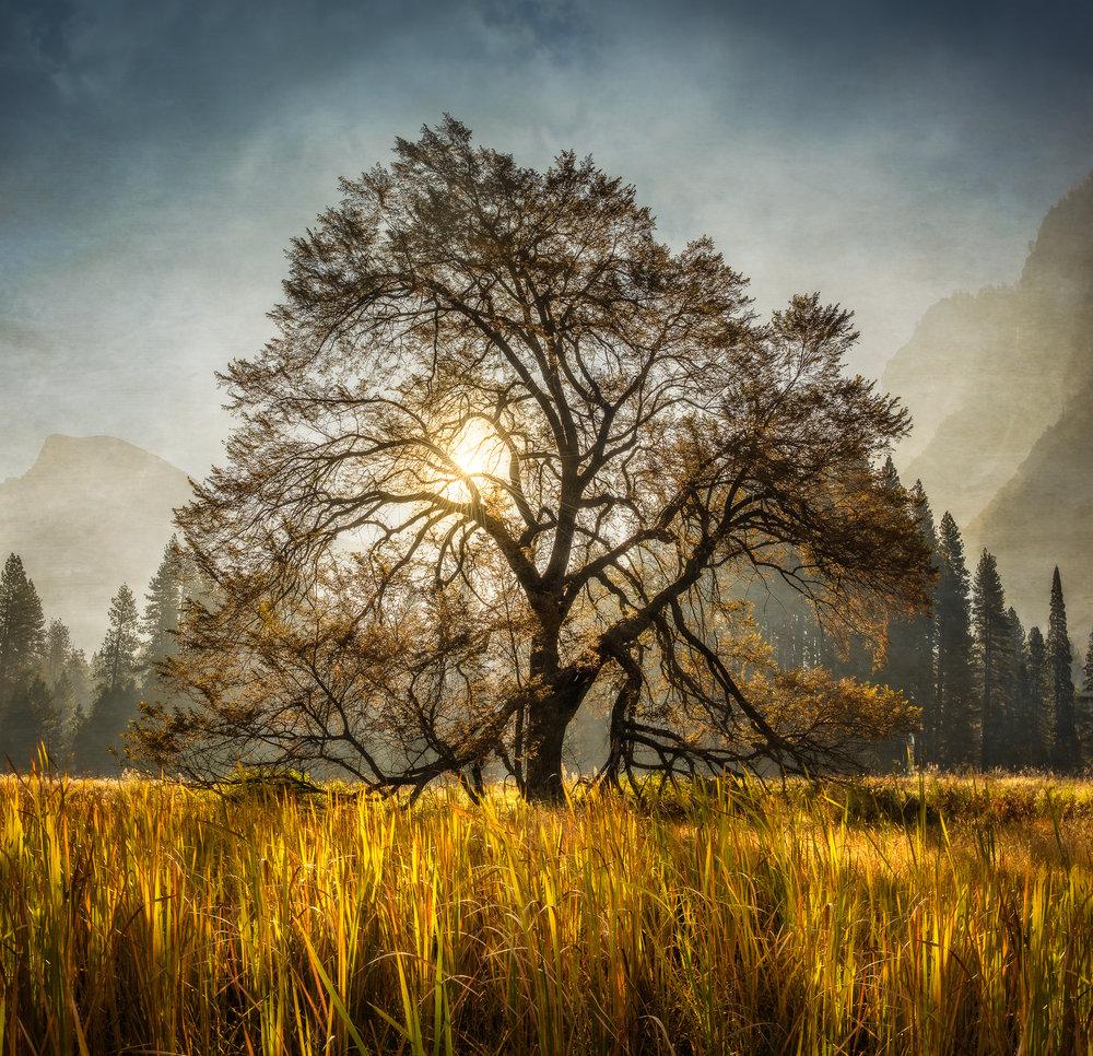 NAPA-Yosemite-39.jpg