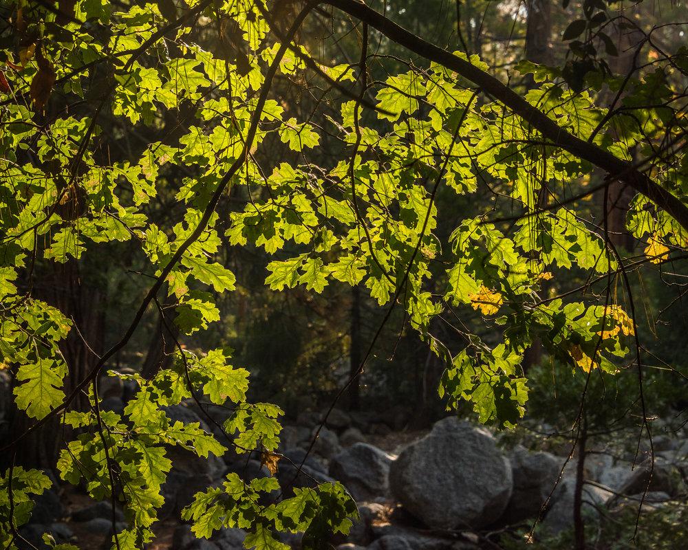 NAPA-Yosemite-53.jpg