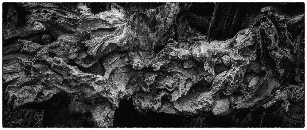 NAPA-Yosemite-60.jpg