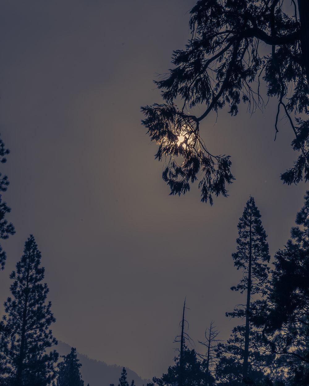 NAPA-Yosemite-59.jpg