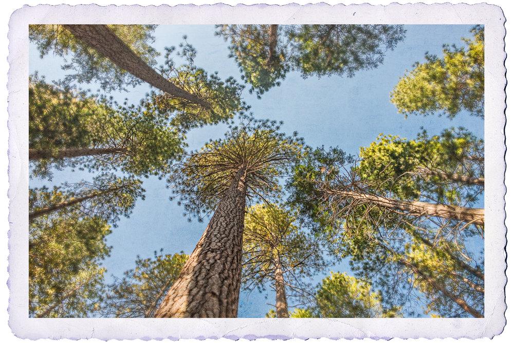NAPA-Yosemite-63.jpg