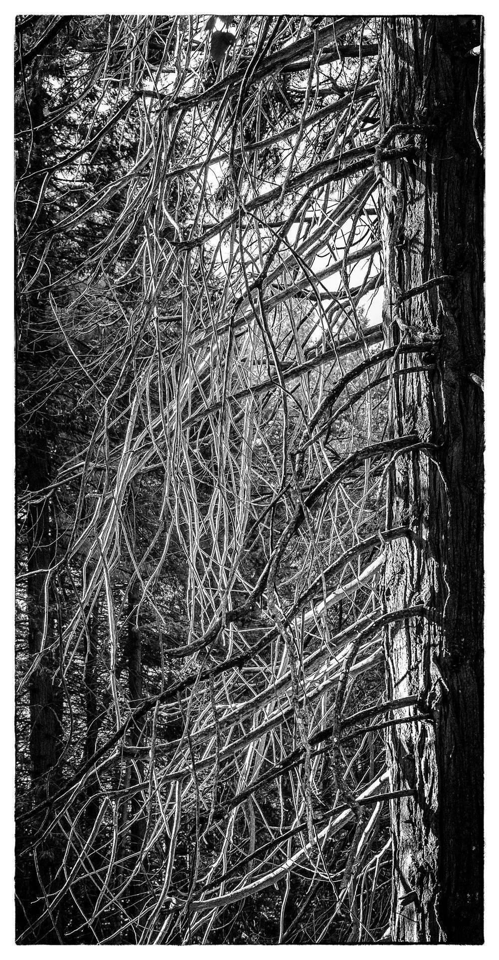 NAPA-Yosemite-67.jpg