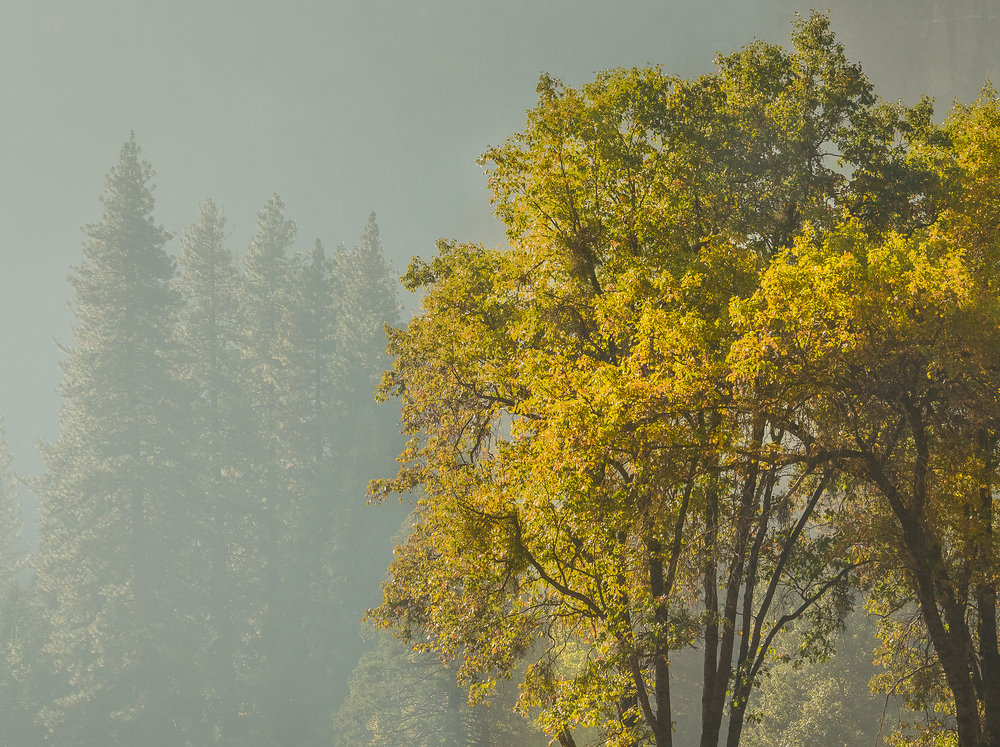 NAPA-Yosemite-71.jpg