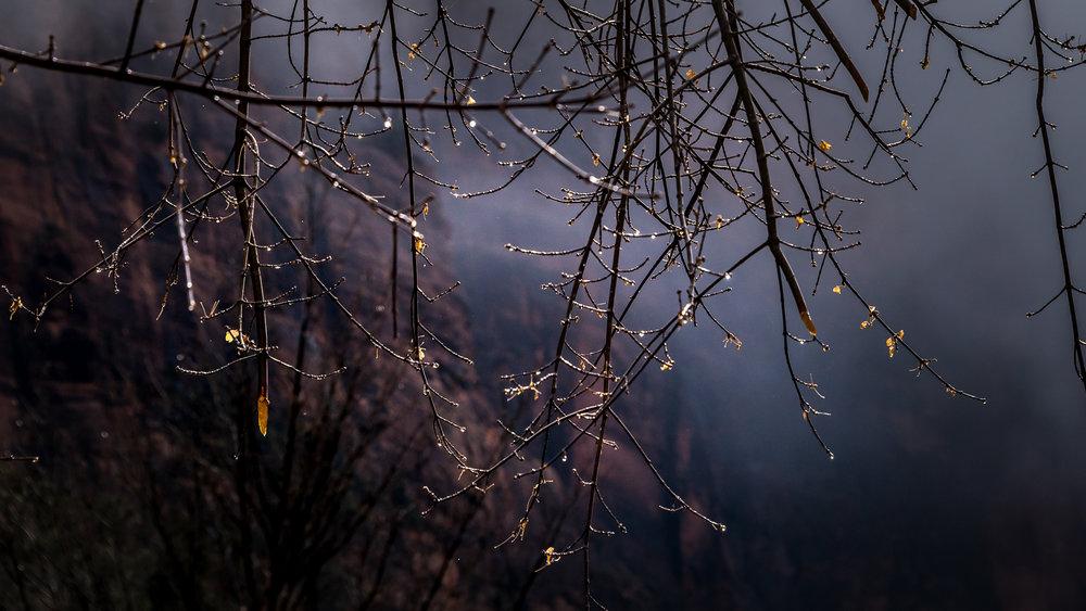 Yosemite-Zion-22.jpg