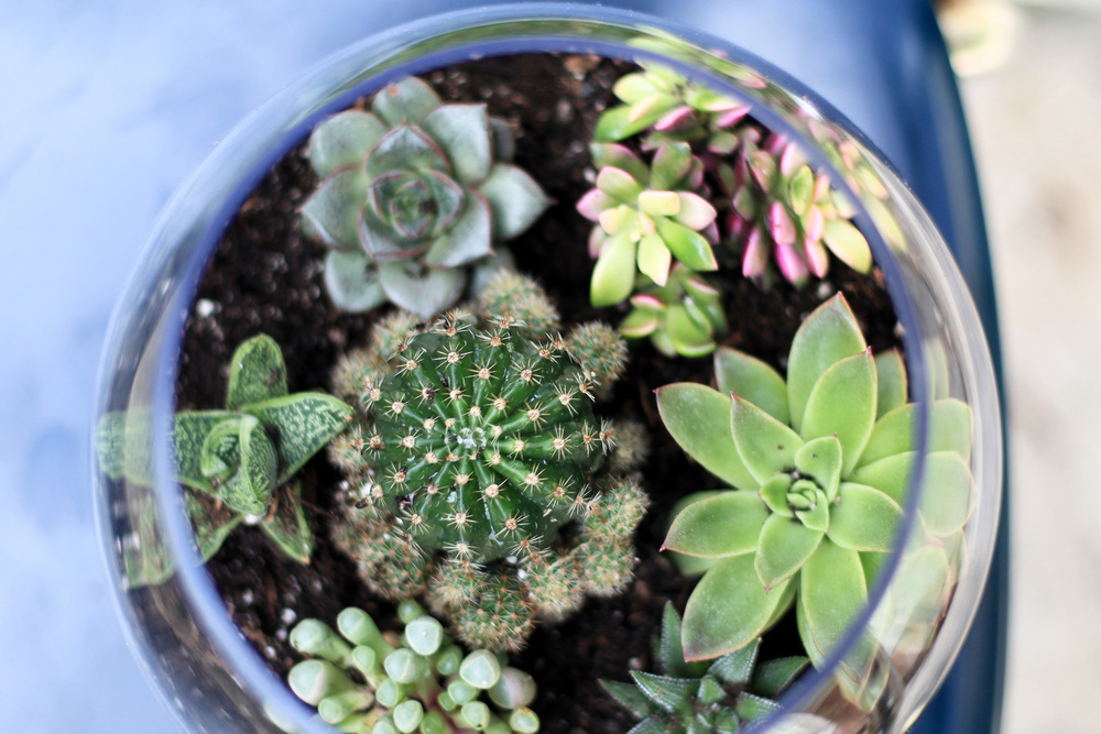 DIY Terrarium (4 of 8).jpg