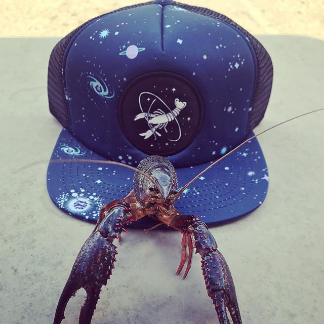 Welcome to the #crawfish galaxy ✨💫✨💫 . Hat:: @howlerbros