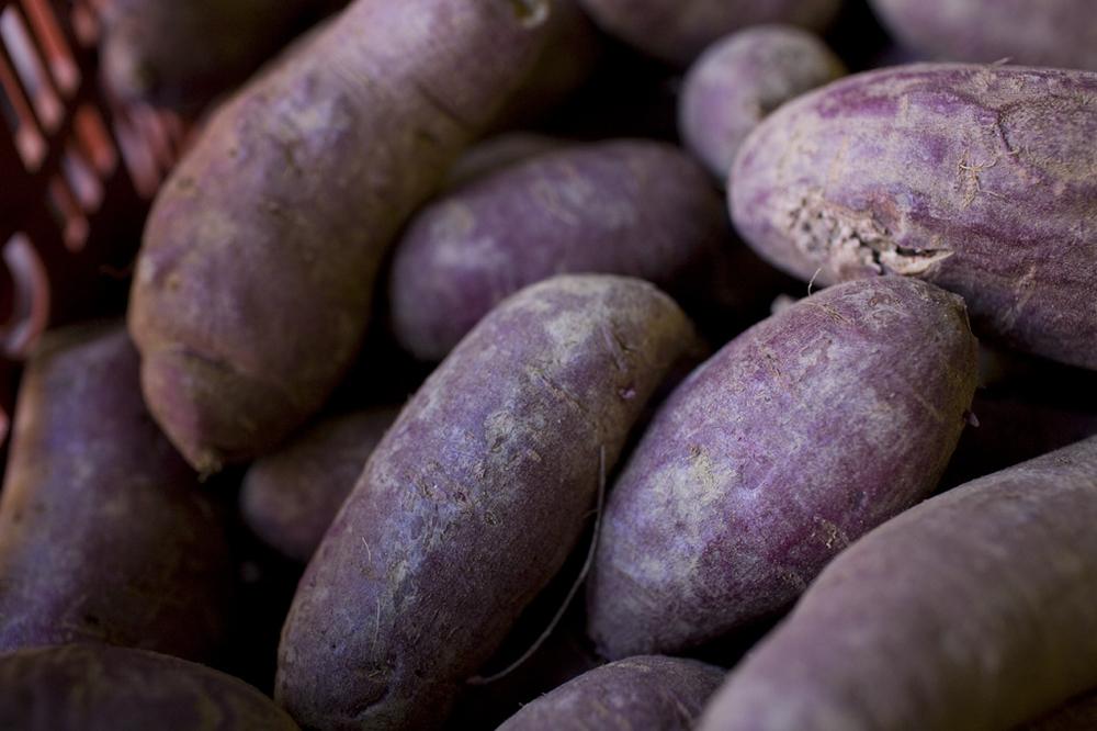 2010_rafi_purple_sweet_potato_038s.jpg