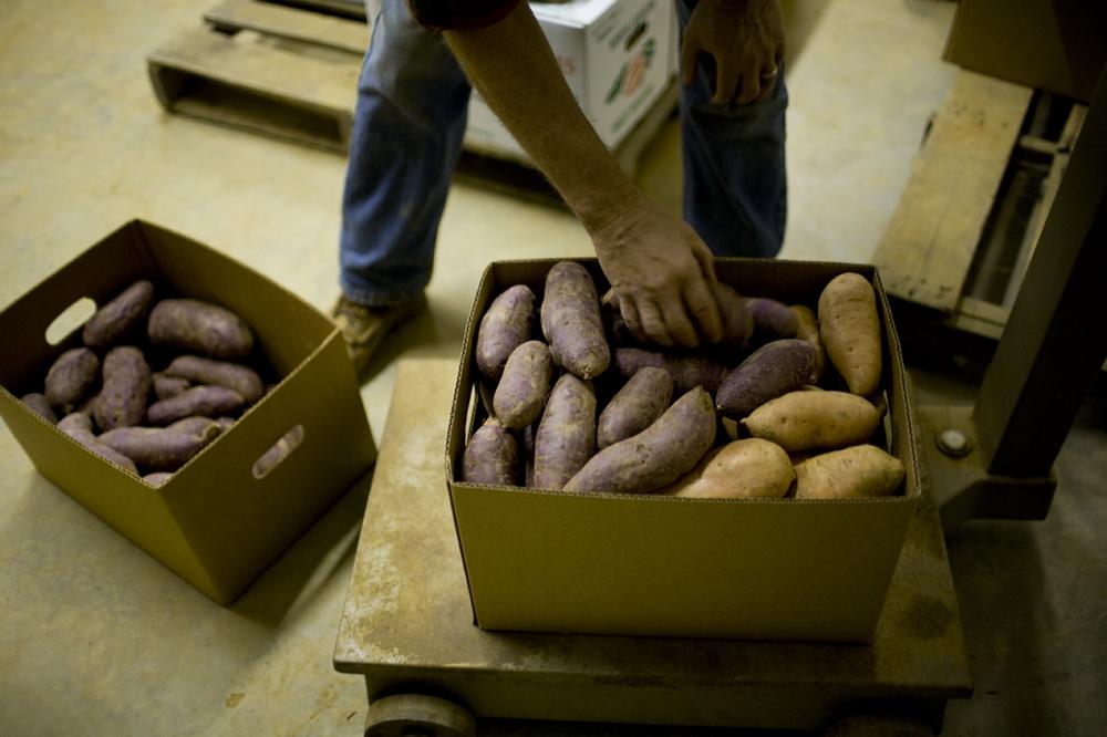 2010_rafi_purple_sweet_potato_196s.jpg