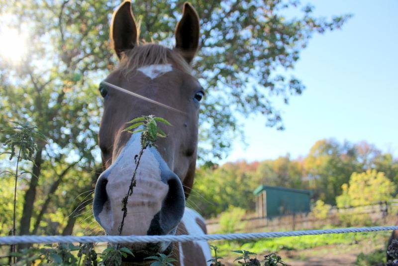 Hello to the horses