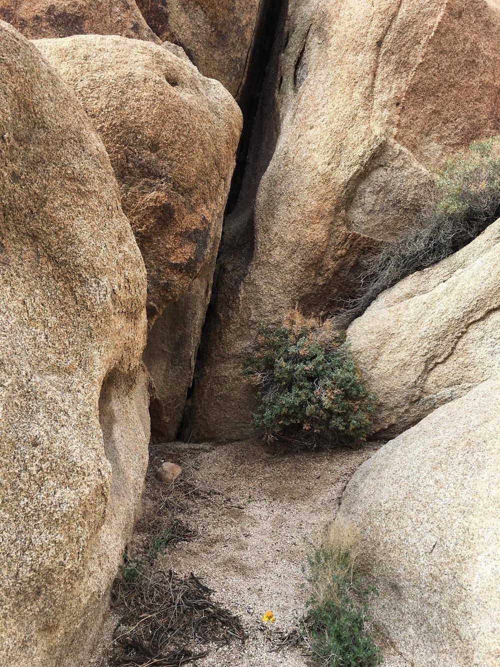 Arch Rock Trail