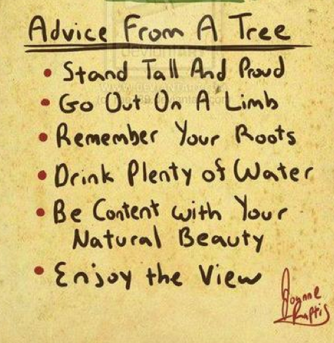 thewastedgeneration :      advice from a tree