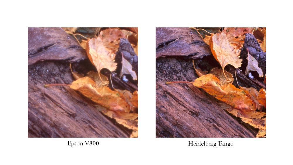 Sharpness comparison between a flatbed scan from an Epson V800 and a drum scan on a Heidelberg Tango