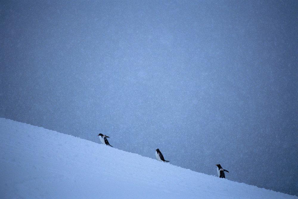 Antarctica_35_E100_19_sRGB.JPG