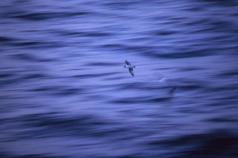 Antarctica_35_E100_12_sRGB.JPG