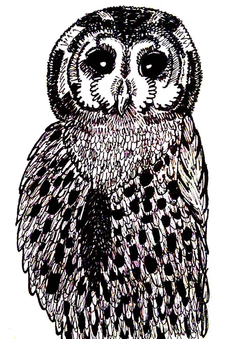 """Owl"" drawn by my wife, Alyssa."