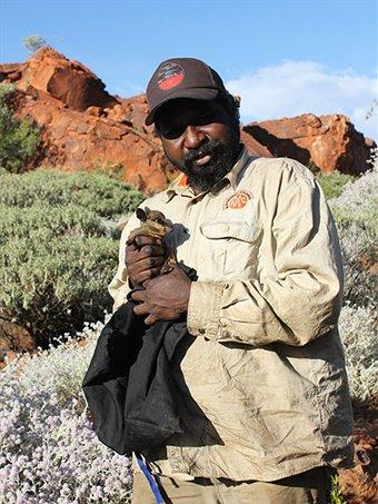 Kernott Samson, Jigalong ranger with a baby wallaby