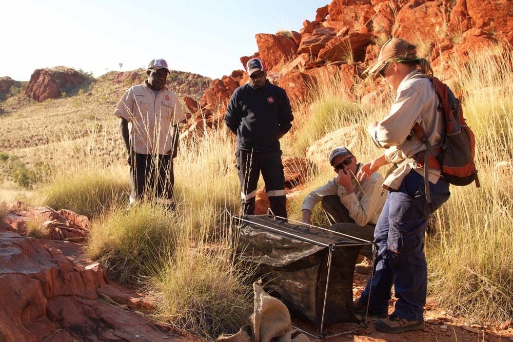 Department of Parks and Wildlife staff working with  Martu to set up the traps.