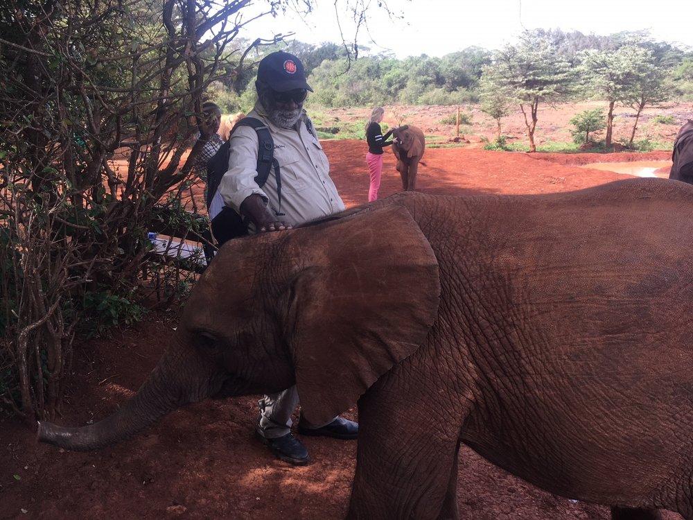 Muuki elephant.jpg