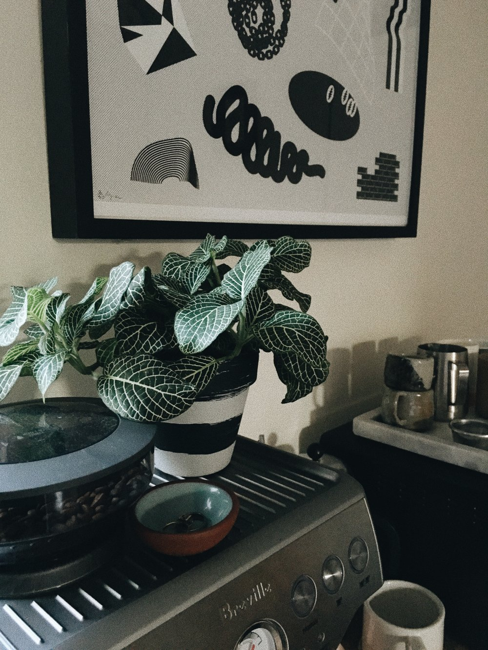 New home for our planter 002 + new print by Troy Lehmann