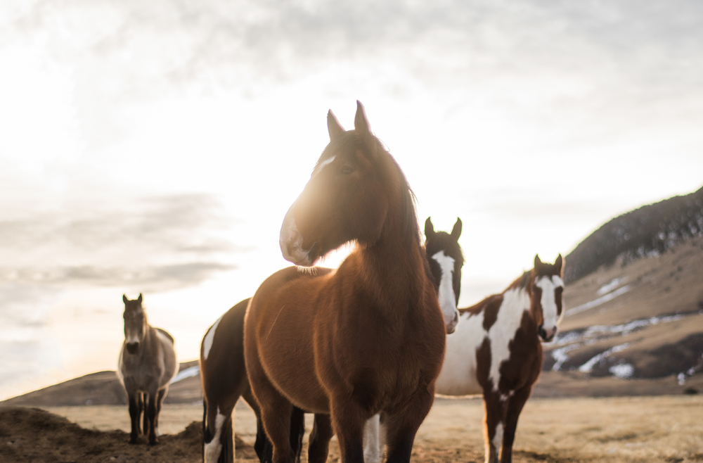 91 Ranch--2.jpg